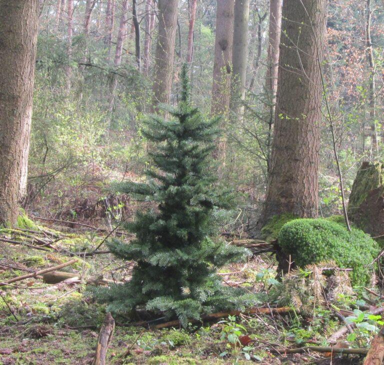 Basic Tree Golden Mocca 240cm-1821